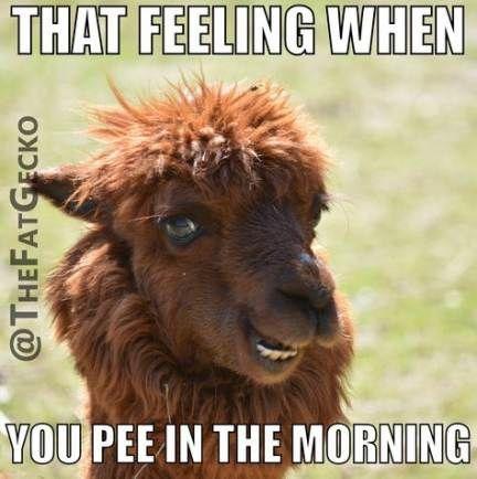 28 Ideas Funny Good Morning Memes Hilarious So True Funny Good Morning Memes Funny Pictures For Kids Lamas Funny