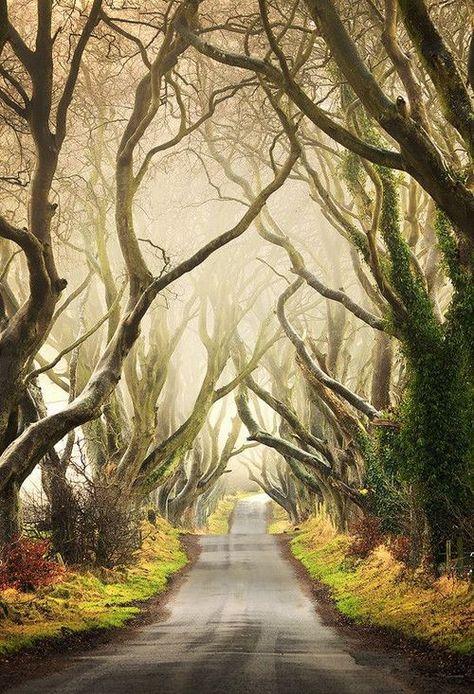 """Photo : Une allée de route faite d'arbre """"Les Haies Sombres"""", Irlande du Nord"""