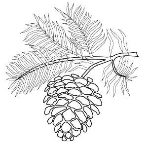 Pinecone Tassel Me Me Fall Tree Coloring Page Bing Images By