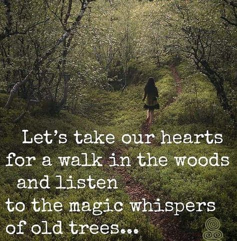 Let's take our hearts for a walk in the woods and listen to the magic whispers of old trees. Image via Wild Woman Sisterhood fb Great Quotes, Quotes To Live By, Me Quotes, Motivational Quotes, Inspirational Quotes, Beauty Quotes, Super Quotes, Quotes On Trees, Quotes About Trees