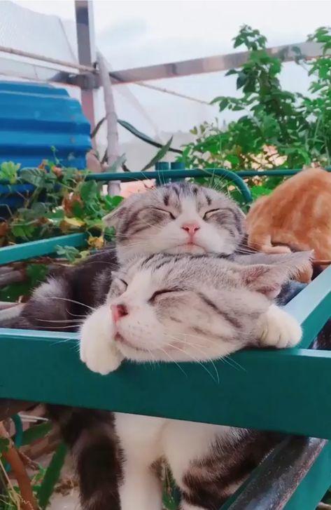 I love cats. #cats #cat #catnames #cutecats #pets #pet #petnames #pets #pet #petnames #pets #sleeping