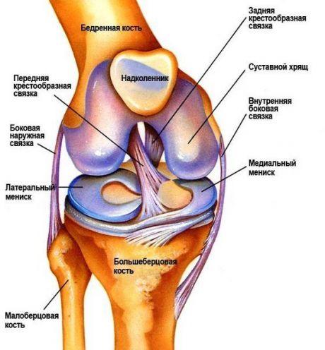 Препараты для лечения коленного артрита