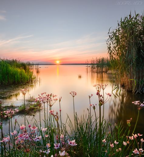 Flowers in the backwater.