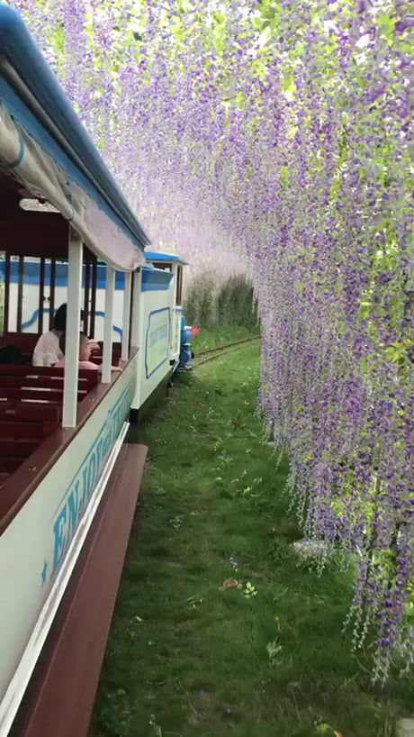 Ashikaga Flower Park in Japan! Ashikaga Flower Park in Japan!