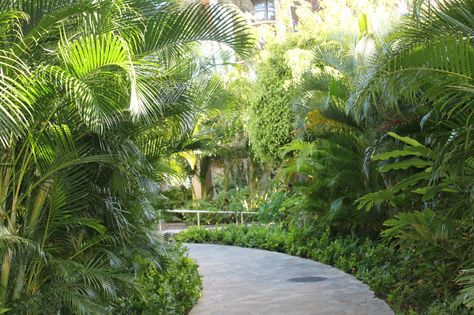 So Calm Jardin Tropical Jardin Exotique