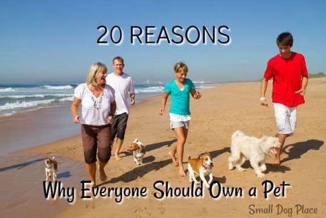 Why Everyone Should Own A Pet Best Small Pets Pets All Small