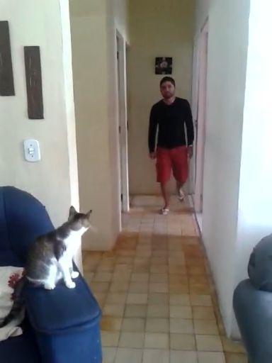 High Five Cat.