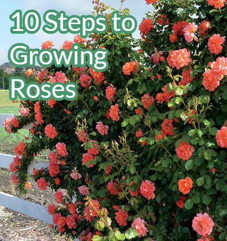 These 10 Essential Steps With Ensure You Have Beautiful And