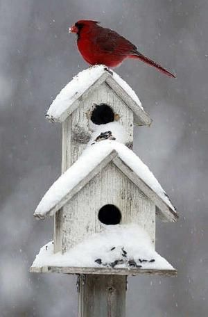 birdhouse/red cardinal by Magnum02