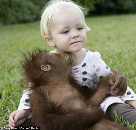The little girl, two, met one-year-old orangutan Rishi at an animal centre while visiting with her father.