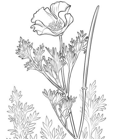 Popular Flowers Coloring Pages In 2020 Flower Coloring Pages
