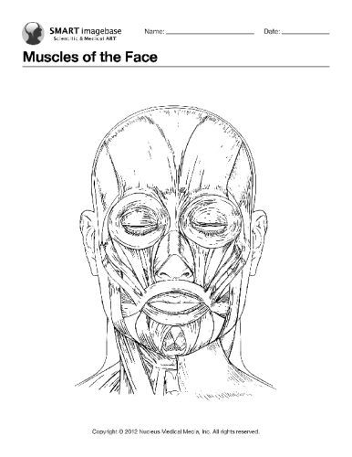 Muscles of the Face  Coloring Book Page  anatomia  Pinterest