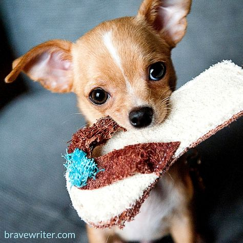 Friday Freewrite First Write A Letter To Your New Puppy Next