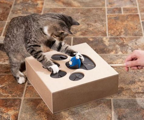 DIY Cat Toy Whack A Mole from Cardboard