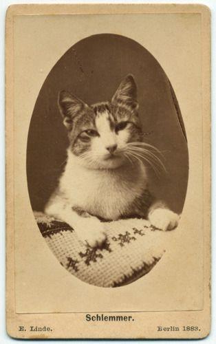 Carte Linde.Ca 1883 Carte De Visite Portrait Of A Cat With Needle