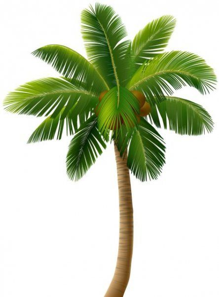 26 Ideas For Tree Png Free Clip Art Palm Tree Png Palm Tree Pictures Palm Trees Painting