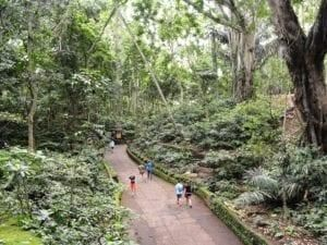 35 Tempat Wisata Di Ubud Untuk Liburan Tak Terlupakan Di 2020 Ubud Liburan Bali