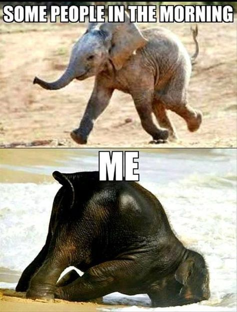 Me in the mornings. - Funny Morning Memes #morningmemes #memes #funny #lol #funnymemes #morning #goodmorning #funnyimages