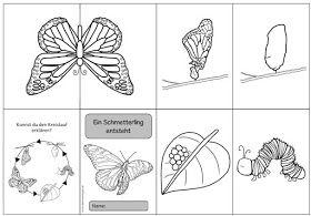 Ideenreise Faltheft Ein Schmetterling Entsteht Schmetterling Projekt Schmetterling Raupe Schmetterling