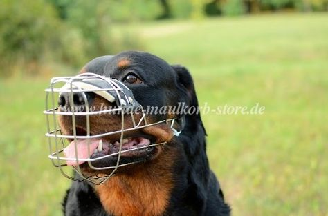 Rottweiler Drahtmaulkorb Hund Mit Polster Rottweiler Maulkorb