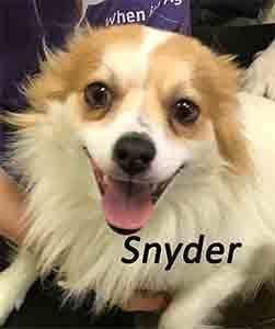 Dogs For Adoption Near St Catharines On Petfinder Dog Adoption Animal Projects Dogs