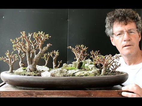 Crassula Ovata Familia Portulacea Youtube Bonsai Forest Jade Plant Bonsai Bonsai Tree Types
