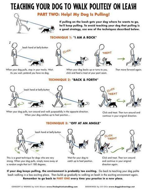 Dog Obedience Training - The Basics