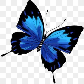 Ilustracao Dos Desenhos Animados De Borboleta Azul Preta Borboleta Clipart Borboleta Preto Azul Borboleta Voadora Imagem Png E Psd Para Download Gratuito Butterfly Illustration Butterfly Watercolor Butterfly Clip Art