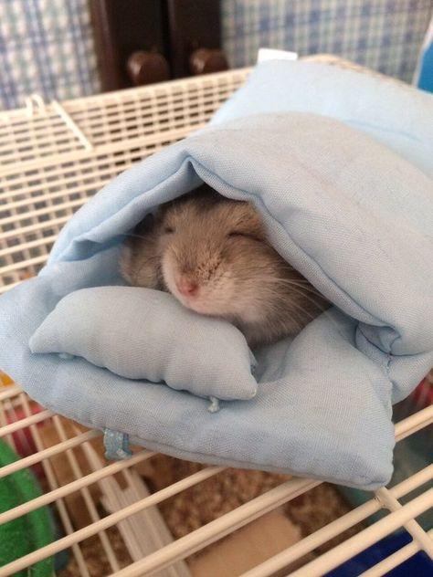 文 on - Pen Tutorial and Ideas Hamster Habitat, Hamster Cages, Cute Little Animals, Cute Funny Animals, Funny Hamsters, Robo Dwarf Hamsters, Cute Rats, Cute Animal Pictures, Cute Creatures