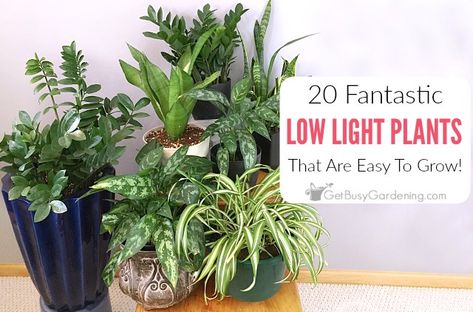 20 Low Light Indoor Plants That Are Easy To Grow