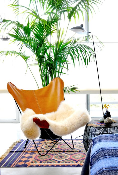 My LA home will have at least one Kentia Palm. Filters the air and adds an amazing feel to a smaller apartment
