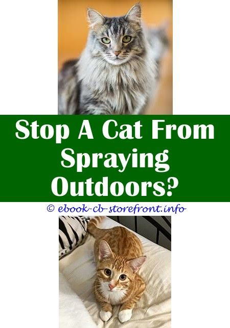 8 Jolting Diy Ideas Spray To Deter Cats From Eating Plants Flea