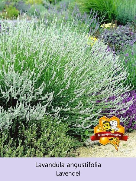 Bienenfreundliches Staudenbeet 21 Pflanzen Vorgarten Ideen Pflanzen Und Garten