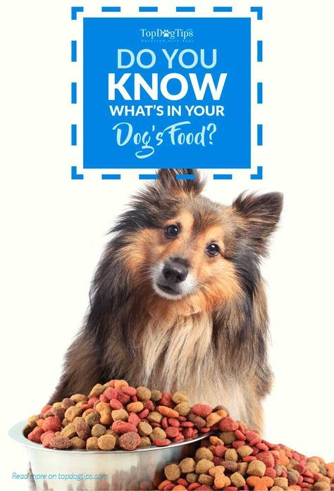 Do You Know What S In Your Dog S Food Dog Food Recipes Best