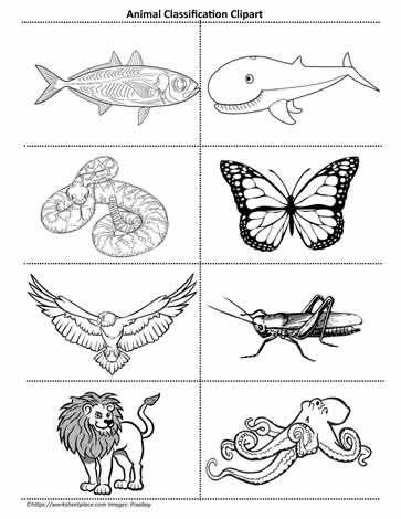 Animal Clipart Animal Clipart Animal Classification Animal Habitats