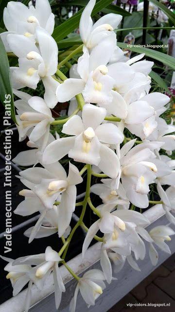 Vademecum Interesting Plants Plants Nature Color