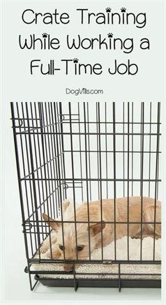 Dog Training Go To Place Dog Training Undergroud Fence Flags