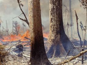 Amazon Rainforest Fire How Big Is Amazon Rainforest How Much Of