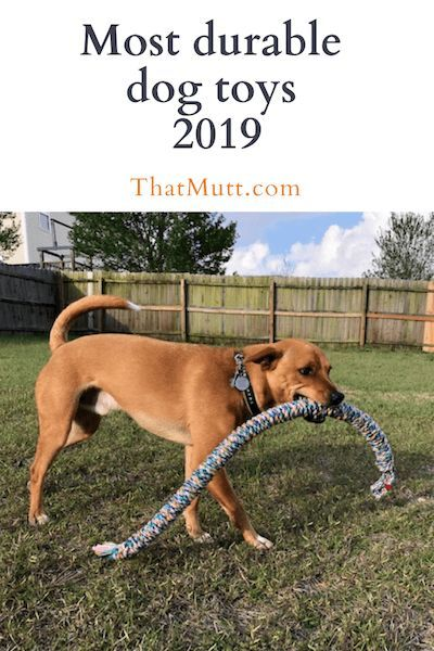 Most Durable Dog Toys 2019 Best Dog Toys Durable Dog Toys