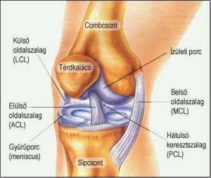térdízületi fájdalom az alsó lábig)