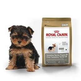 Love This Food For My Yorkie Puppy Royan Canin Yorkshire Terrier