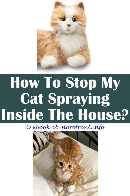 Burts Bees Dander Reducing Cat Spray