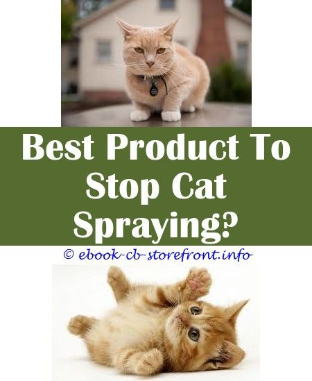 Stupendous Ideas Spray To Keep Cats From Peeing On Things Spray To Stop Cats Scratching Furniture Nz Female Cat Spraying Ever En 2020 Aerosol Sensible Spray