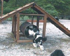 Delicieux 8 Dog Friendly Backyard Ideas | Healthy Paws | DOG FRIENDLY BACK YARDS |  Pinterest | Dog Friendly Backyard, Backyard And Dog