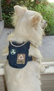 Awww a doggy backpack - check her blog she sews so cute stuff for her puppy and explains how to do it.