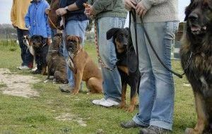 Obedience Training Relate To A Vast Array Of Skills And Techniques