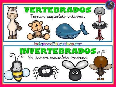 Tipos De Animales 1 Clasificación De Animales Tipos De Animales Fichas De Animales