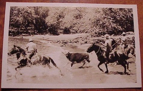 1930's Paniolo Loading Cattle Big Island TH Hawaii AZO RPPC FOR SALE • $20.00 • See Photos! Money Back Guarantee. Tired of receiving your premium Hawaii postcards in an overtaped sandwich bag or a rigid holder that looks like it was dragged for miles down a gravel road? Experience the 382218035640