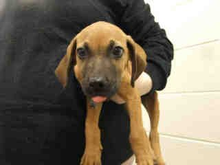 The Humane Society Of Missouri S St Louis Area Adoption Centers Feature Dogs Cats Puppies Kittens Rabbits And Many Other Pets To Humane Society Pets Dogs