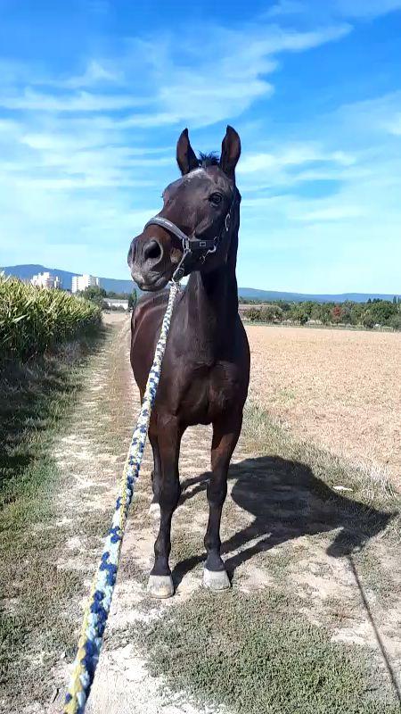 #horse #horseriding #horserider #horses #horsesofinstagram #horsepower #horsephotography #horsepictures #equestrian #equestrianstyle #equestrianideas #dressage #dressagehorse #dressagerider #video #horsevideos